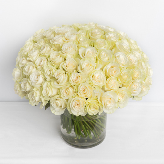 100 roses white side View